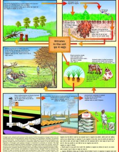 Nitrogen cycle chart also environment charts exporter manufacturer distributor  supplier rh vcpmaps