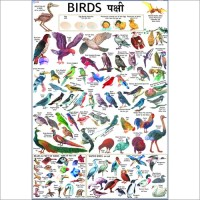 Birds Charts - Birds Charts Exporter, Manufacturer ...