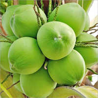Image result for coconut pictures