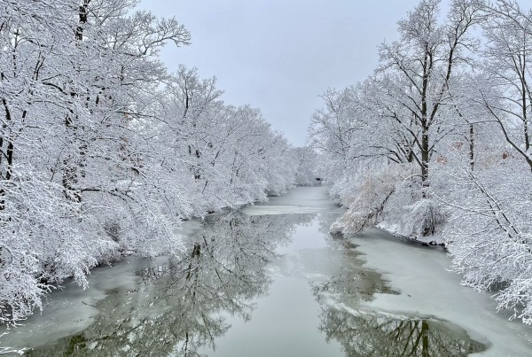 Red Cedar River in Winter, white snow covers the trees on both sides of the river which is beginning to ice over from the banks.
