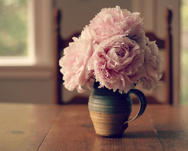 Peonies, Morning II de Clarice, source www.flickr.com