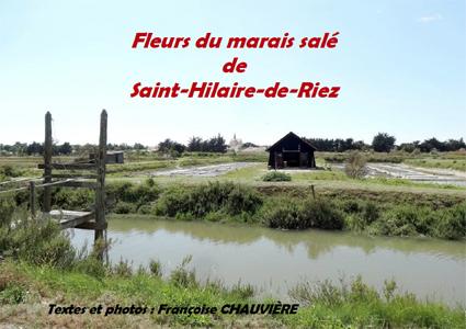 Fleurs du marais salé de Saint-Hilaire-de-Riez