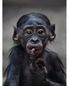 Хорошая задача принесет примату тем больше пользы, чем больше он над ней будет думать