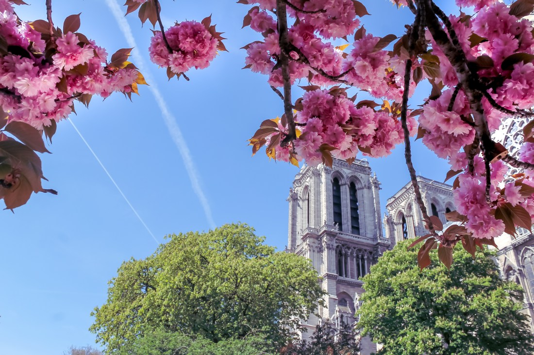 Survival French Phrases for Travellers