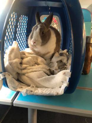 travel with a rabbit by train