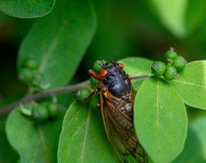 Trauma Treatment, Cicadas and the Emerging Buzz of Hope
