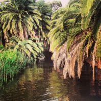 """Imbarcati per il ritorno, lasciamo il B&B La Piaggetta con questa suggestiva immagine """"tropicale""""."""