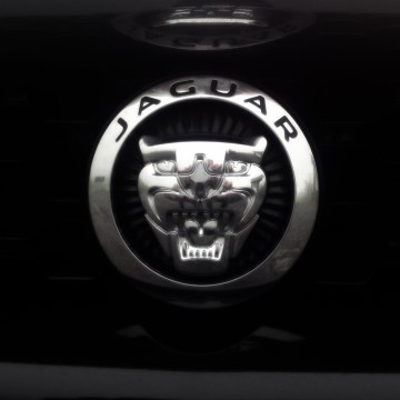 Jaguar: myth and legend