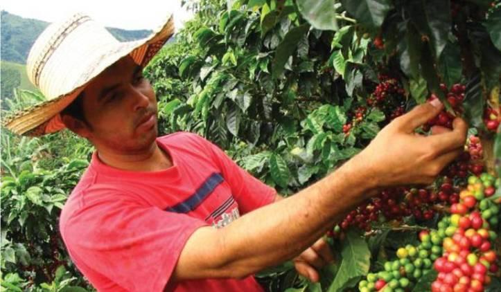 Resultado de imagen para recolectores de cafe