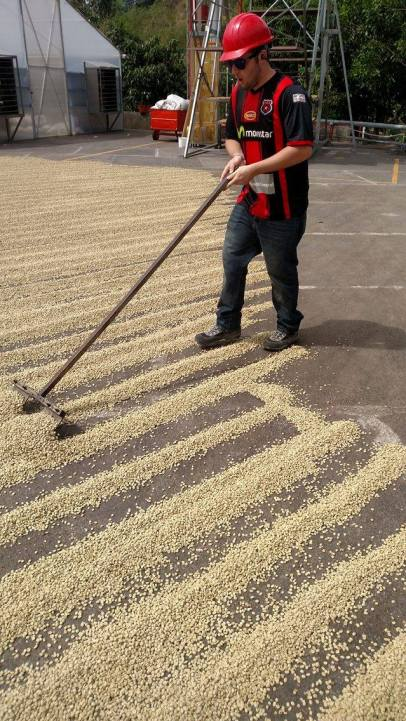Alex was the first to try turning the beans during the drying process.