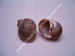 D shaped opening shell