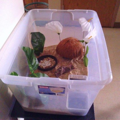 A storage bin can be used as temporary housing for your hermit crabs during a move - Photo credit: Donna Boo