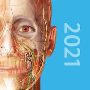 Human Anatomy Atlas скачать