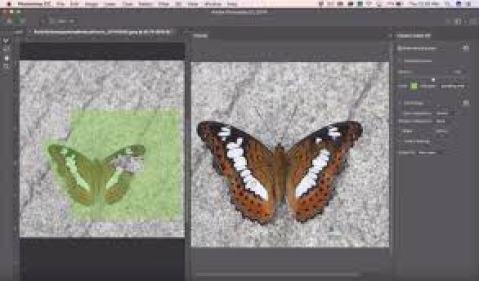 Adobe Photoshop CC 2019 Crack Full Serial Key Torrent Download