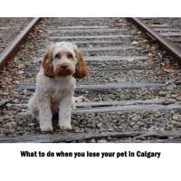 What to do when you lose your pet in Calgary
