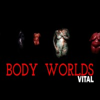 BODY WORLDS in Calgary: Vital, at Telus Spark