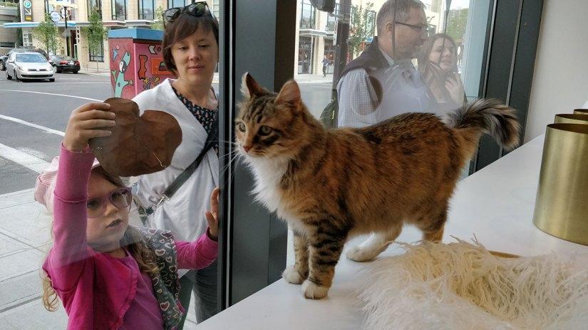 Regal Cat Cafe