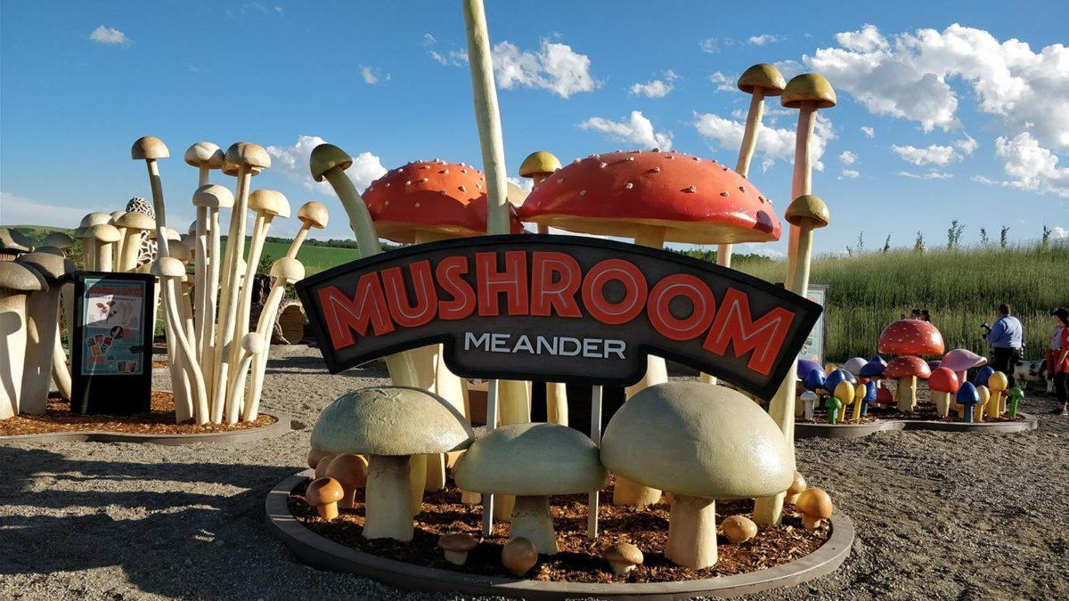 Granary Road Mushroom Meander