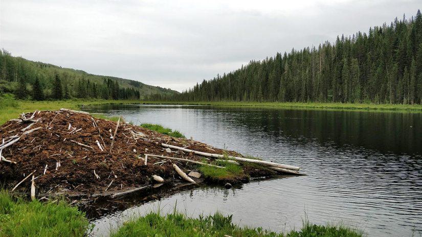 Winchell Lake Beavers