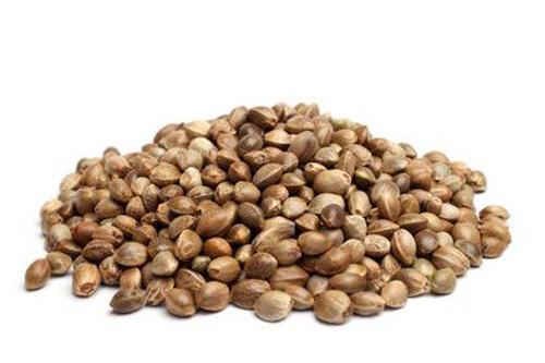 Alberta Cannabis Seeds