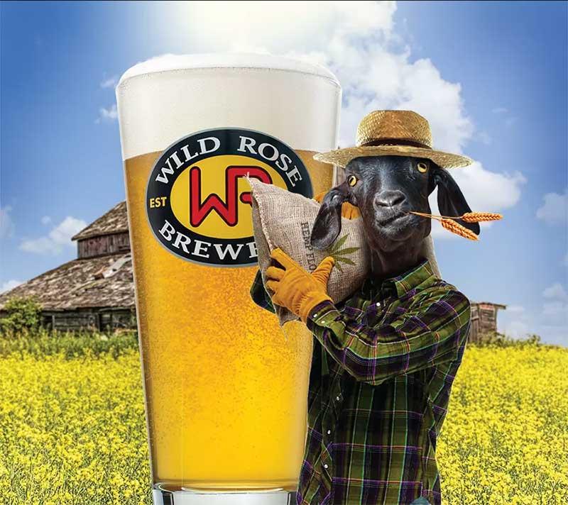 Best IPA in Calgary Wild Rose High Hemp
