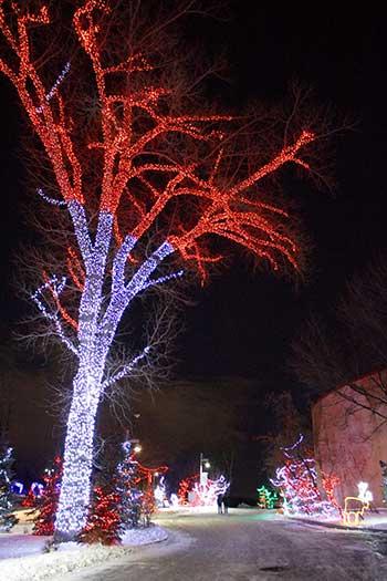 Calgary Zoo Lights Glowing