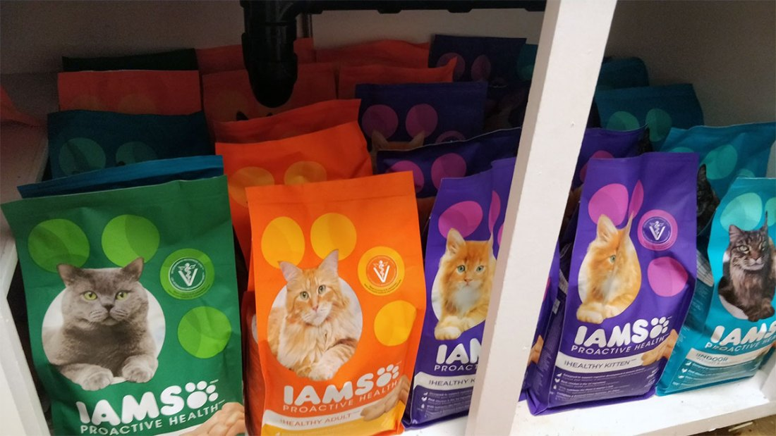 Free cat food iams