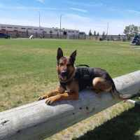 The Calgary Police K9 Unit Is Now On Instagram