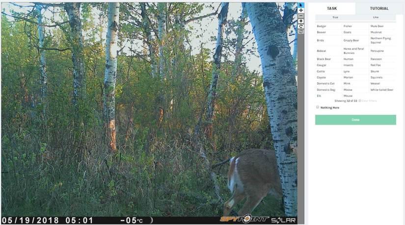 Calgary Captured Nothing White Tailed Deer