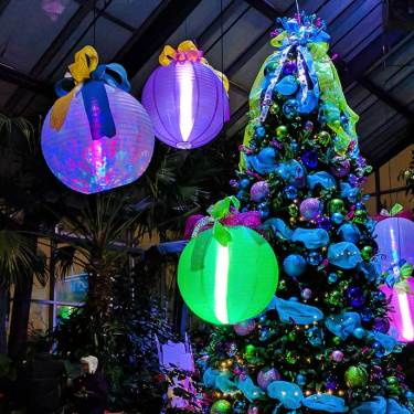 Win A Pair Of ZOOLIGHTS Tickets!