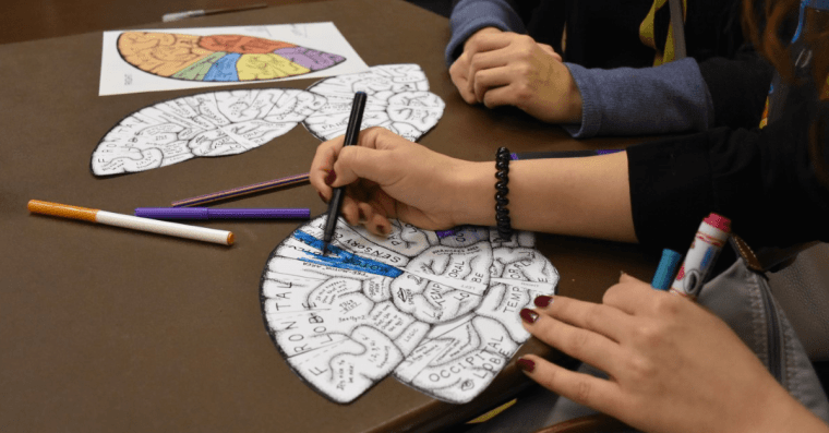 Several sit at a table in a meeting, colouring in some diagrams of the human brain. Only their hands are visible.