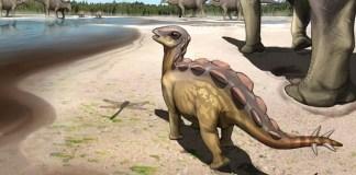 Smallest Footprint of Stegosaur Found