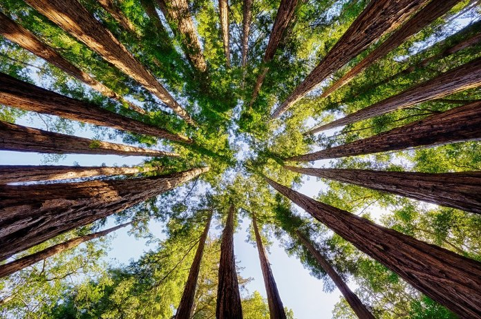 Covering Every Inch of The Earth with Trees Still Won't Stop Climate Change - Craffic
