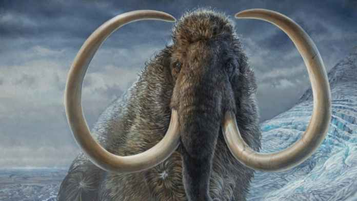 Colossal's Bioscientists Plans To Bring Woolly Mammoth Back From Extinction