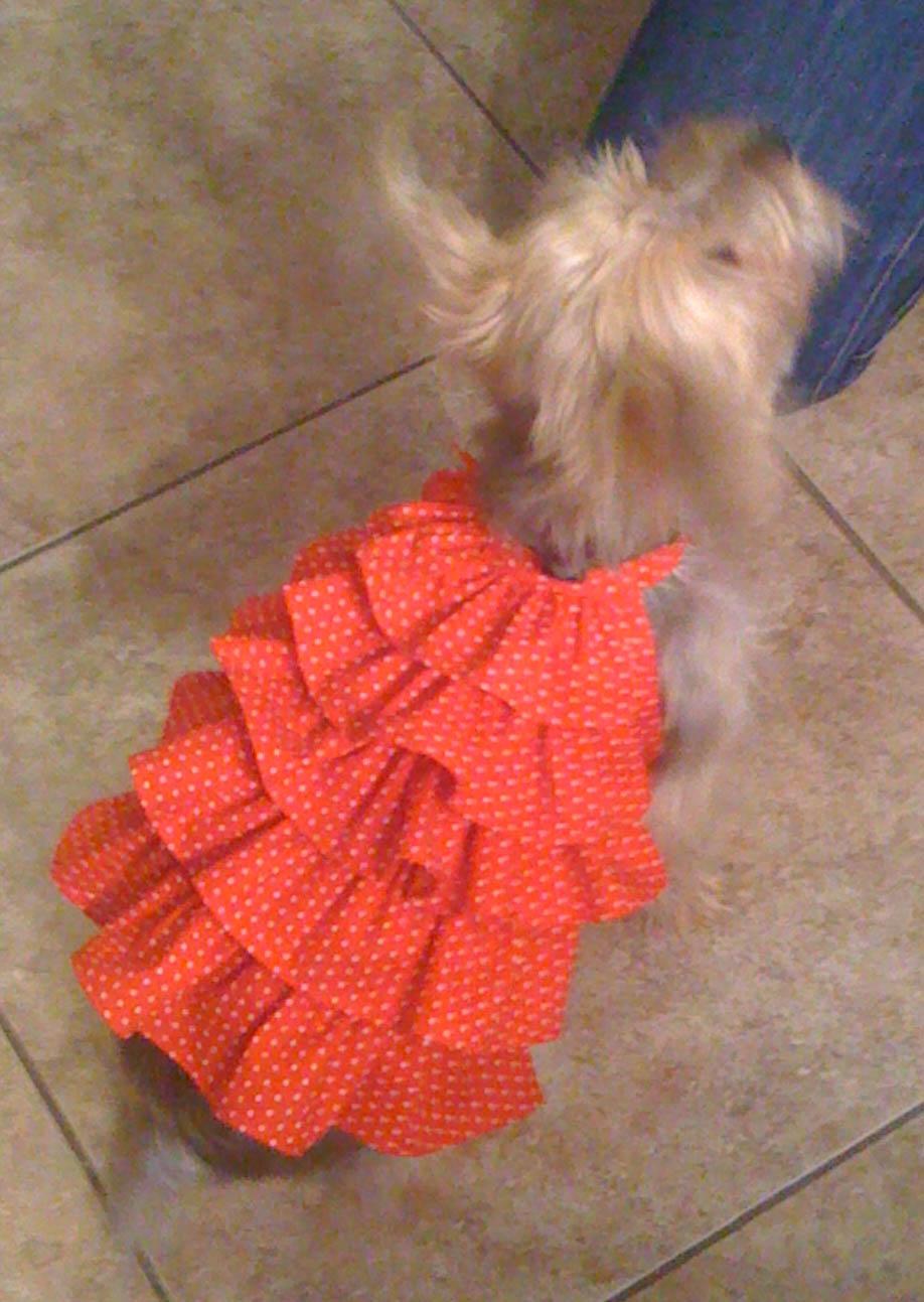 Dog Clothes Patterns : clothes, patterns, Clothes, Patterns, Tutorials