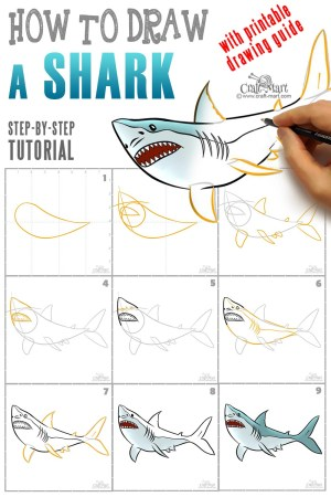 draw shark easy steps step drawing craft learn mart guide