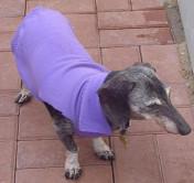 No Sew Dog Wrap