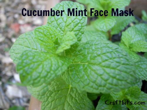Cucumber Mint Face Mask