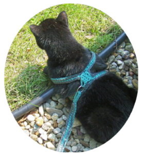 Crochet A Cat Harness Leash