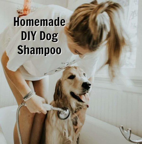 DIY Dog Shampoo