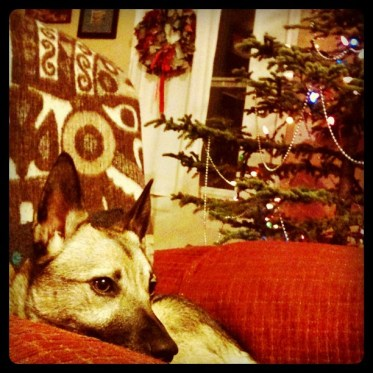 Shiloh and the Tree