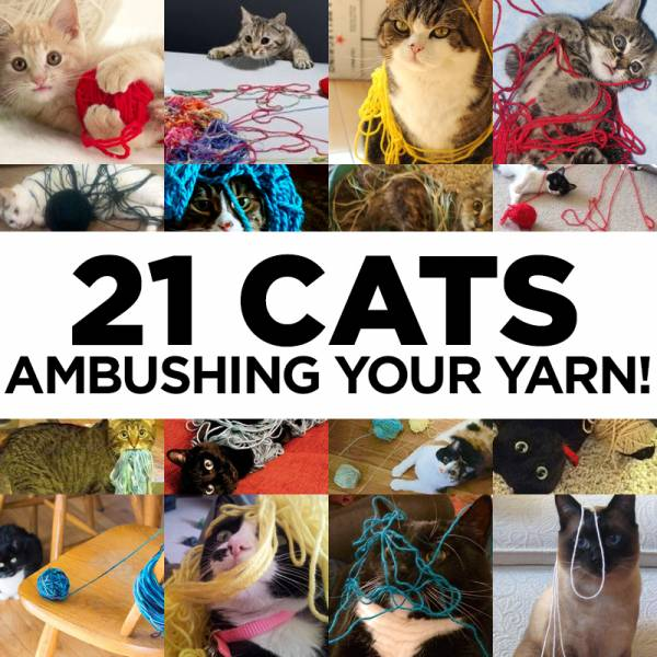 21_Cats_Ambushing_Your_Yarn