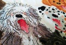 Backstitch – e żmudne haftowanie w psach z Suzy's ZOO