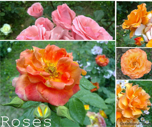 fresh-roses-spring-garden-printable