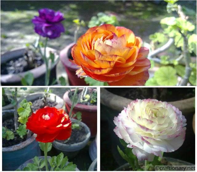 beautiful-flowers-spring-free-printable