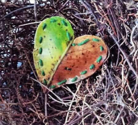 Leaf-Heart-message