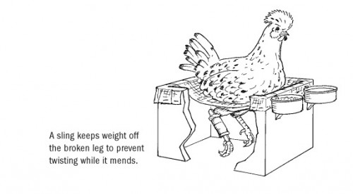 craftlog » Blog Archive » Storey's Guide to Raising Chickens
