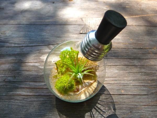 Light Bulb Terrarium Extinction - Craft Organic