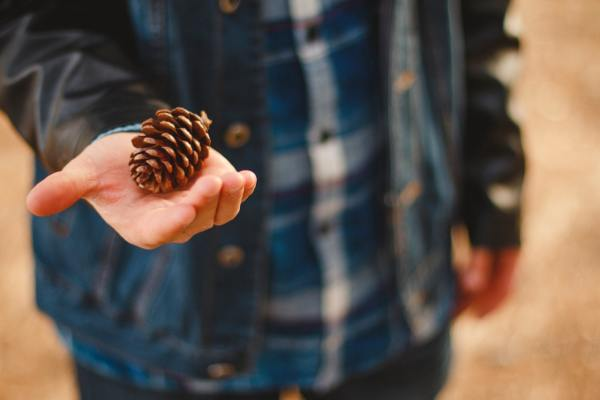person holding pine cone in his hand