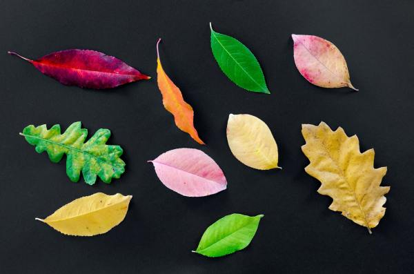 assorted types of leaves isolated on black background